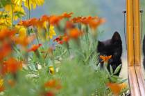 Kitty in the flowerbed