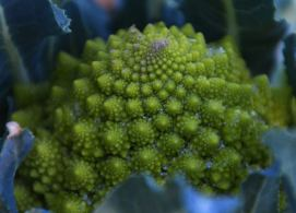 Fractals of nature